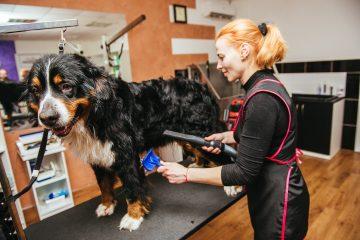 Grooming e treino canino